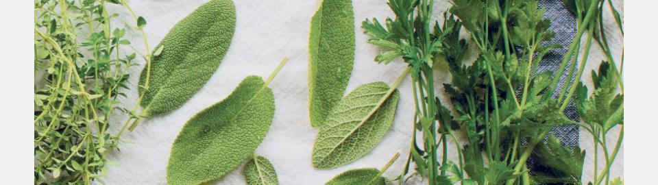 Как правильно замораживать зелень